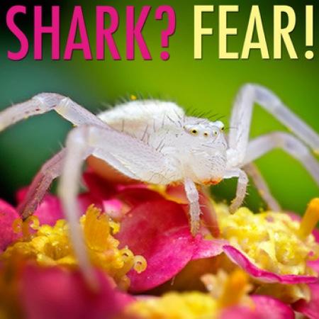Shark? Fear!