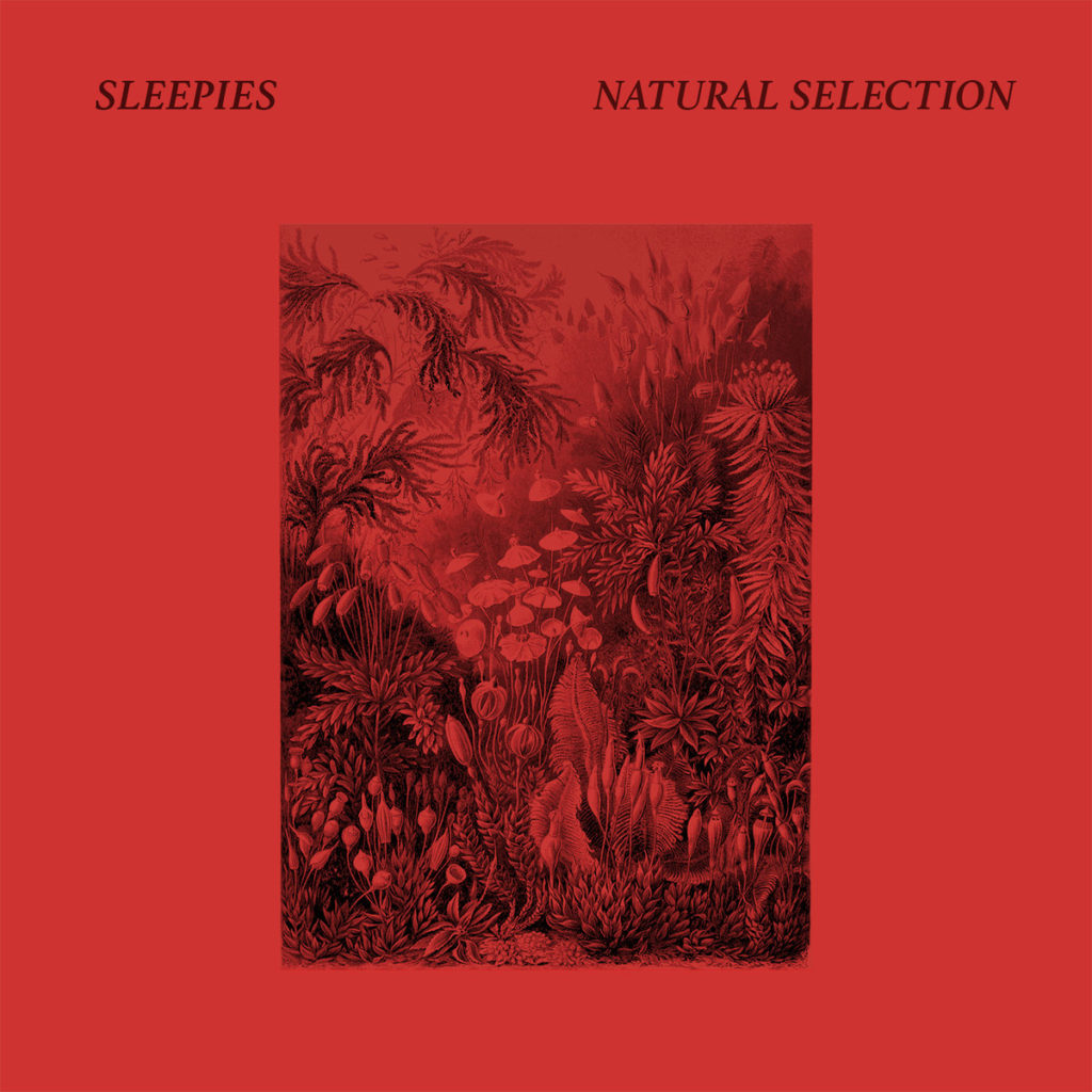 natural selection by sleepies